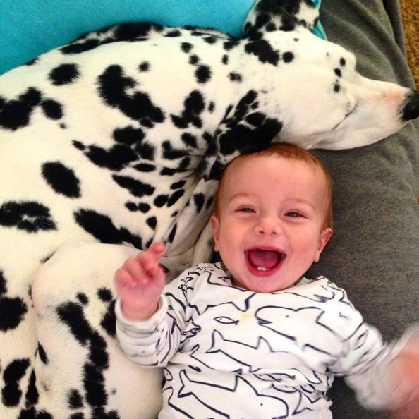 Dalmatian and babies --- excellent match IF care is taken in choosing a dog with sound temperament AND teaching your child to be respectful of animals.