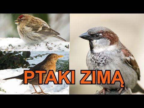 Polskie ptaki zimą - nowy film edukacyjny dla dzieci po polsku - AbcZabawa - YouTube