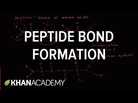 Peptide bond formation | Macromolecules | Biology | Khan Academy - YouTube