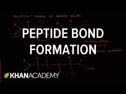 Peptide bond formation   Macromolecules   Biology   Khan Academy - YouTube