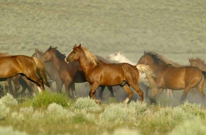Save the wild horses!