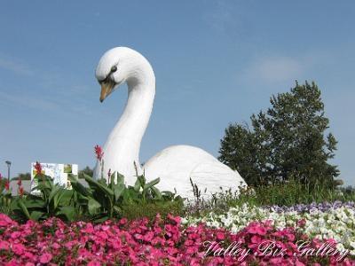 Downtown Swan