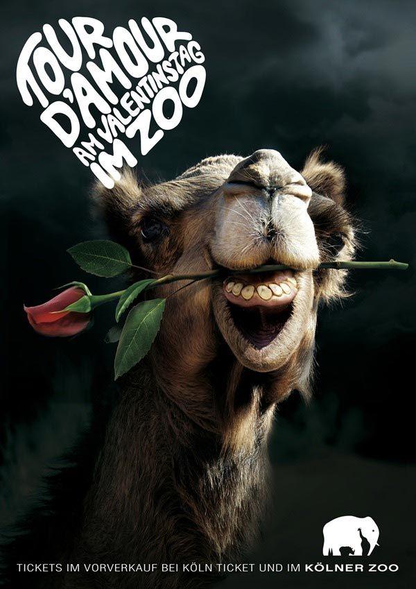 Día de San Valentín en el zoológico / Blog de diseño gráfico 9Musas