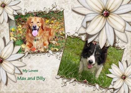 Picking a puppy from a litter - Golden Retrievers : Golden Retriever Dog Forums