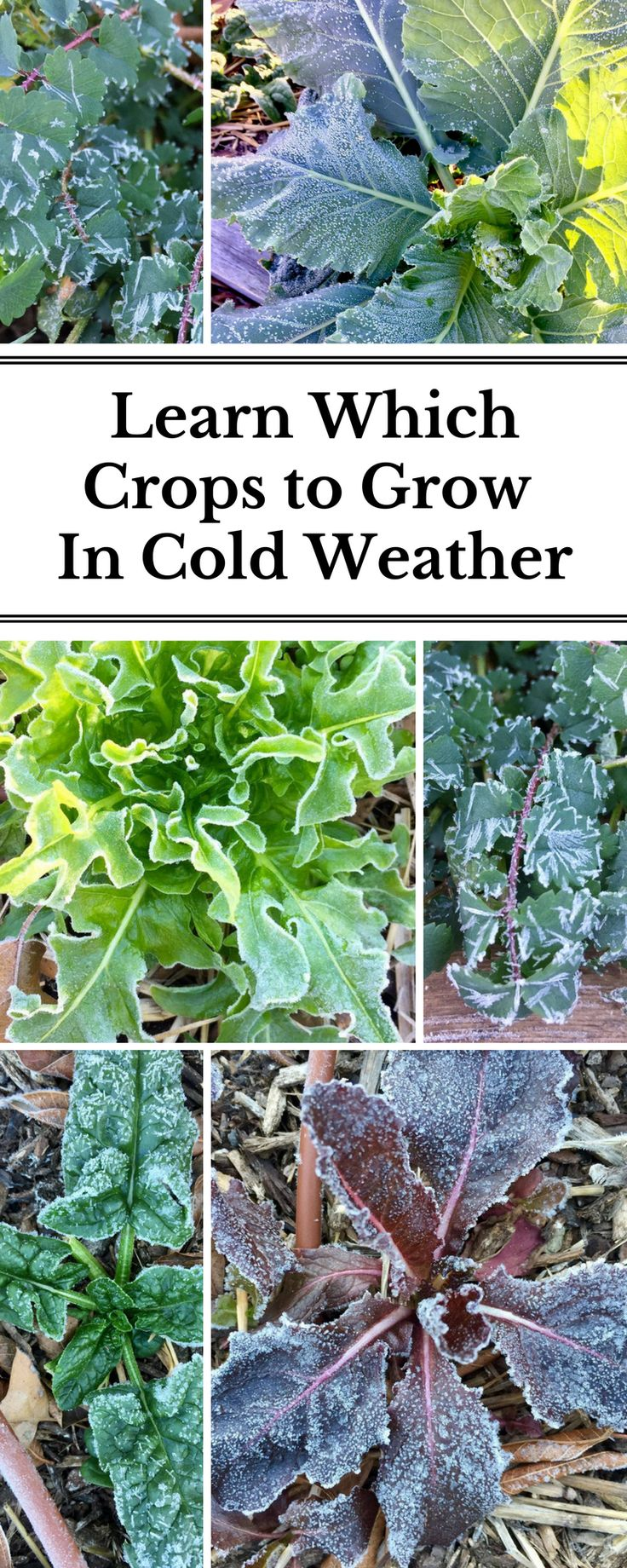 15424 best winter crops images on pinterest winter crops winter