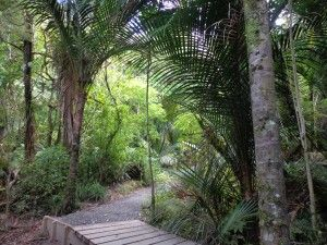 Titirangi and French Bay Loop ~ This walk begins near Titirangi and follows the path down through Atkinson Park to Titirangi Beach and French Bay.