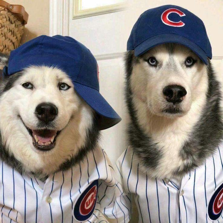 We believe.. go cubs                                                                                                                                                                                 More