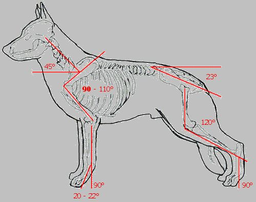 german shepherd pedigrees