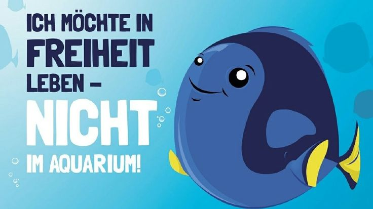 The animals in the SEA LIFE Oberhausen live in the wild