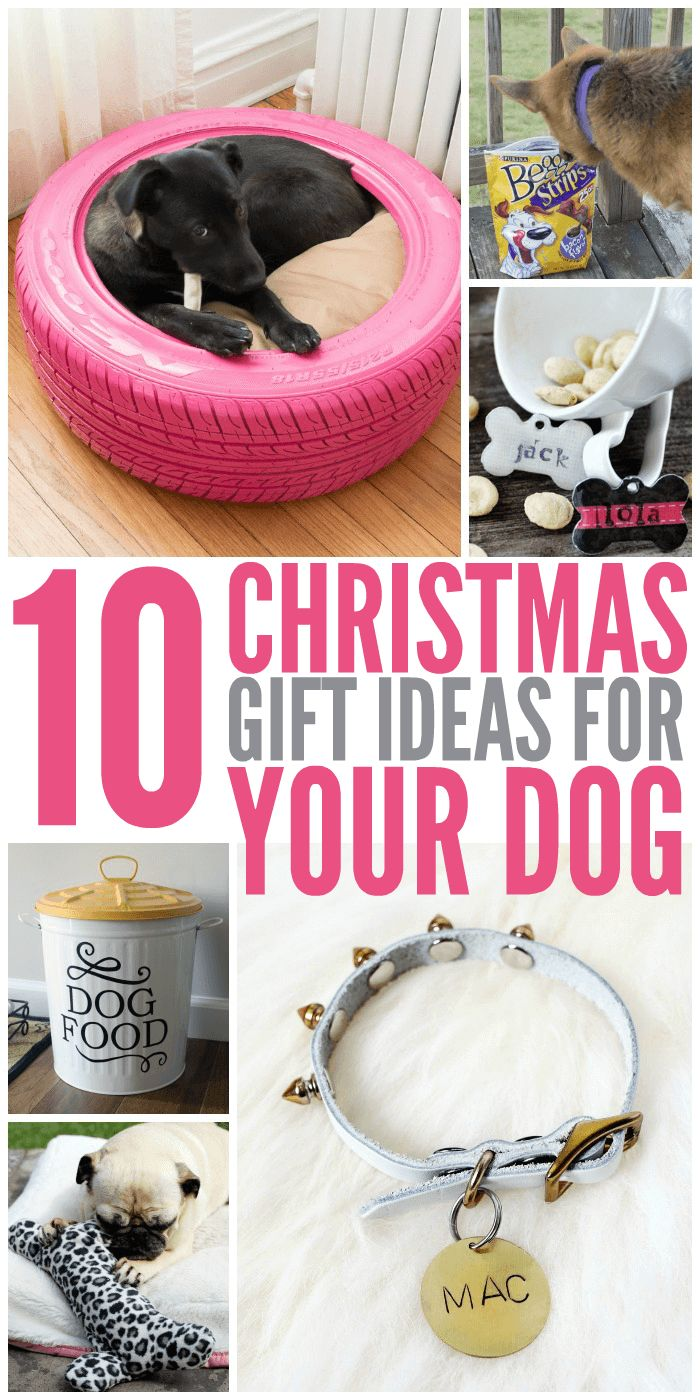 10 Christmas Gift Ideas for Your Dog | Best of Glue Sticks and ...
