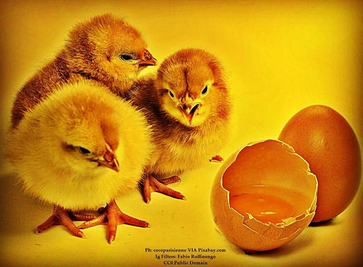Choices...#cibo #food #foodies #foodnetwork #foodandwine #foodstyling #foodblogger #foodbeast #foodlover #foodstagram #foodphoto #foodshare #foodgawker #foodislife #fooddiary #foodism #foodiegram #foodaddict #foodprep #foodpost #foodoftheday #healthyliving #foodtrip #vegan #veg #buongiorno #goodmorning #egg #chick