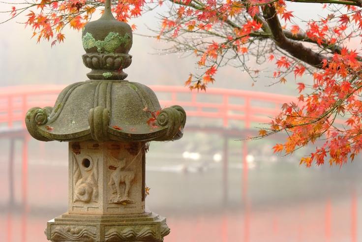 Japanese Garden, Toowoomba.   QLD  Taken by Parkerartzzi
