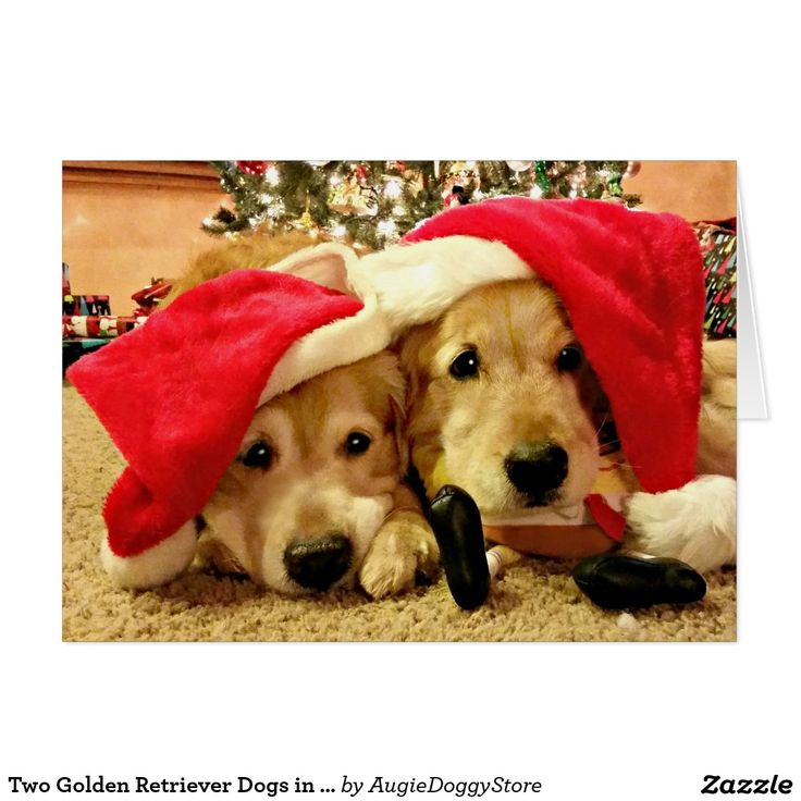 Two Golden Retriever Dogs in Santa Hats Christmas Card by #AugieDoggyStore