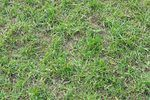 Does Vinegar Kill Weeds in Lawns? | eHow