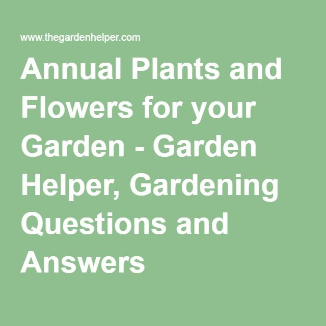 Annual Plants and Flowers for your Garden - Garden Helper, Gardening Questions and Answers