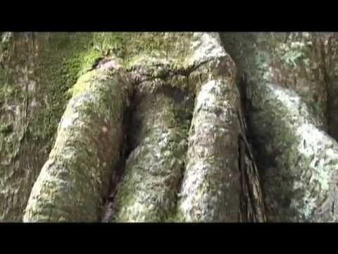 IT IS NOT THE END OF THE WORLD IT IS THE END OF CAPITALISM QUITE LOGICAL     www.2012mayanword.org    Todo el mundo habla de las Profecías Mayas sobre el 2012  ¿Pero quién está escuchando a los mayas?    Este innovador documental nos acerca a las voces de las personas mayas , que nos comparten su visión de las profecías de sus ancestros y su lucha por defender a la Madre Tierra y a su cultura ...