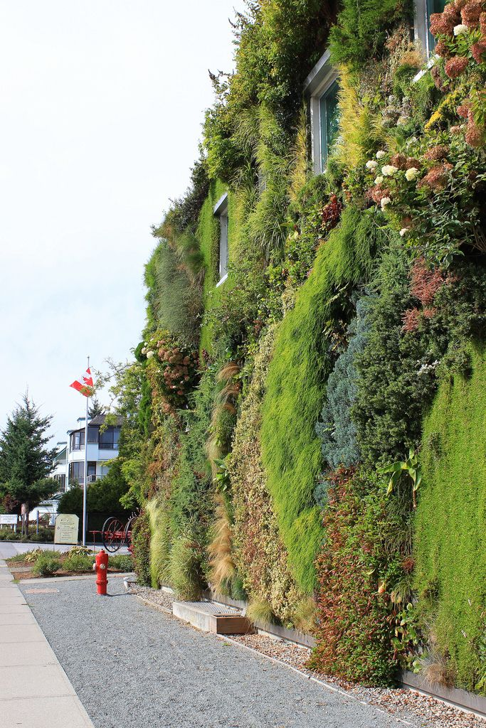 Green Wall At Semiahmoo Library. Surrey, BC Pictures