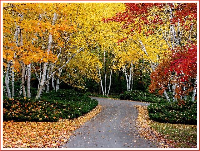 Hidden Lake Gardens in the Irish Hills, MI: Irish Hill, Mothers Day, Michigan States, Hidden Lakes, Photo, Lakes Gardens, Pure Michigan, Botanical Gardens, Kid