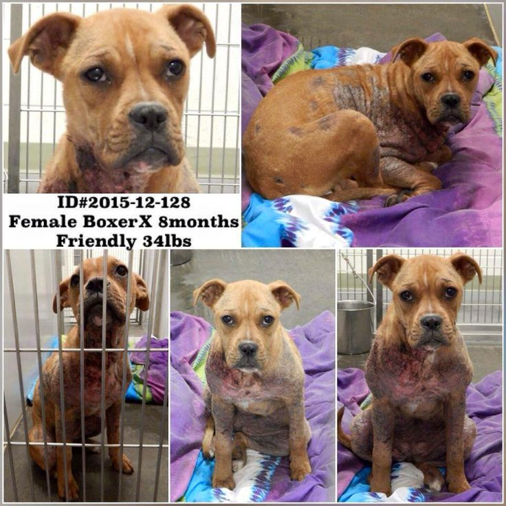 17++ Barrow county animal shelter images