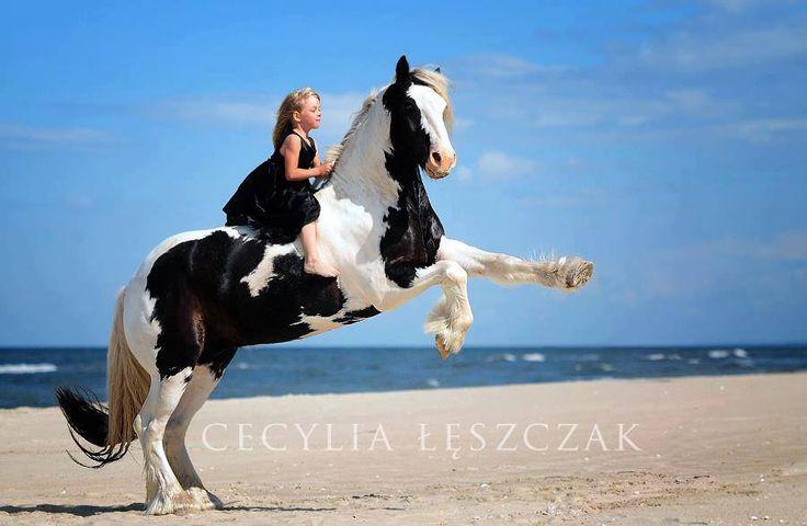 white horse beach girls About directv tv commercial, 'hannah davis riding her horse' directv presents hannah and her horse fashion model hannah davis, is riding her horse down the beach while explaining that.