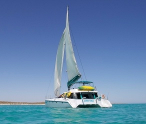 Stephen Scourfield discovers a Shore Thing at Ningaloo Reef. http://yhoo.it/HQsIh6 Picture: Stephen Scourfield/The West Australian