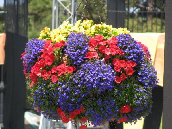 beautiful hanging basket: Beautiful Colors, Bright Colors