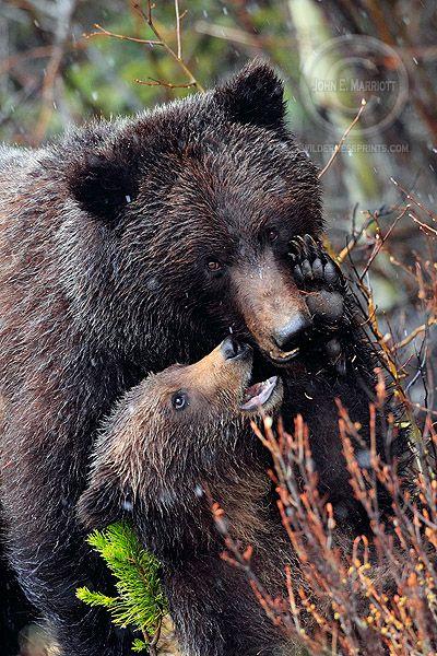 John E Marriott's Wildlife Photography Blog: Remembering Dawn