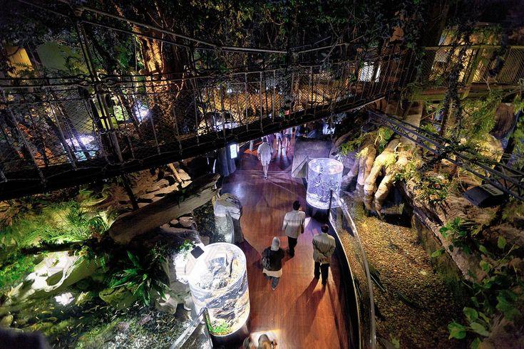 Peddle Thorp - Dubai Mall Aquarium & Underwater Zoo, UAE