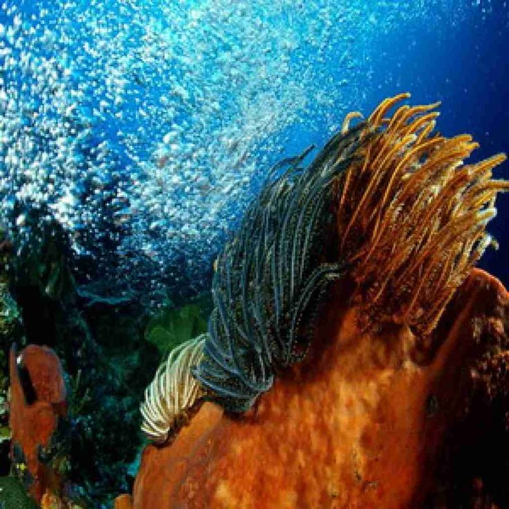 When you have a trip to Indonesia, the main destination should be visited is Bunaken Island