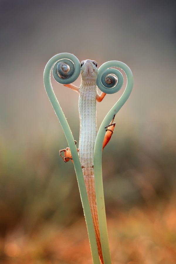 love lizard by Hendy Mp