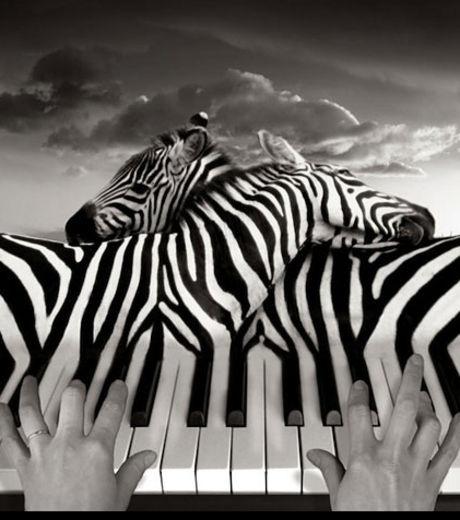 Dans ce photomotage, des touches de piano de confondent avec des zèbres