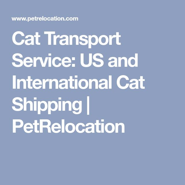 Cat Transport Service: US and International Cat Shipping | PetRelocation