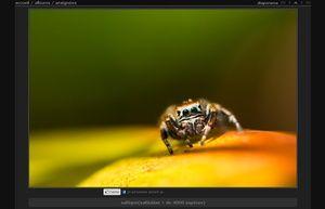 Piwigo is open source photo gallery software for the web | piwigo.org