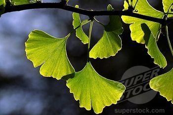 SuperStock_1848R-288709.jpg 350×233 pixels