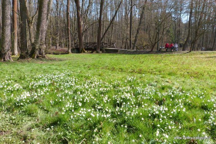 Peklo in Czech Republic in spring . Snow Flacks in abundance.