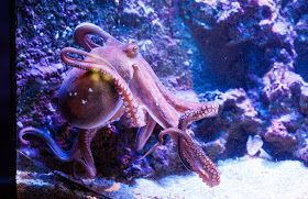 Monte Carlo Daily Photo: Oceanographic Museum - Octopus