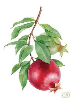 pomegranate patterns by Natalia Tyulkina, via Behance