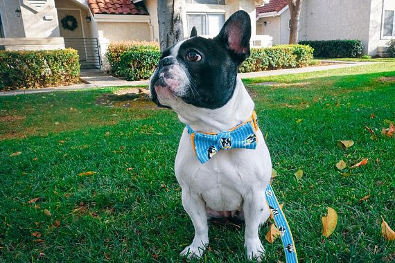 French Bulldog Collar Boston Terrier Collar Frenchie Dog