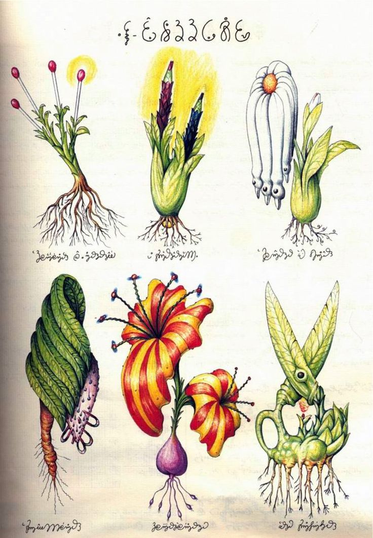 Notice the Scissor Plant? Luigi Serafini's masterpiece Codex Seraphinianus, or the Fantastical Encyclopedia. 1976-78