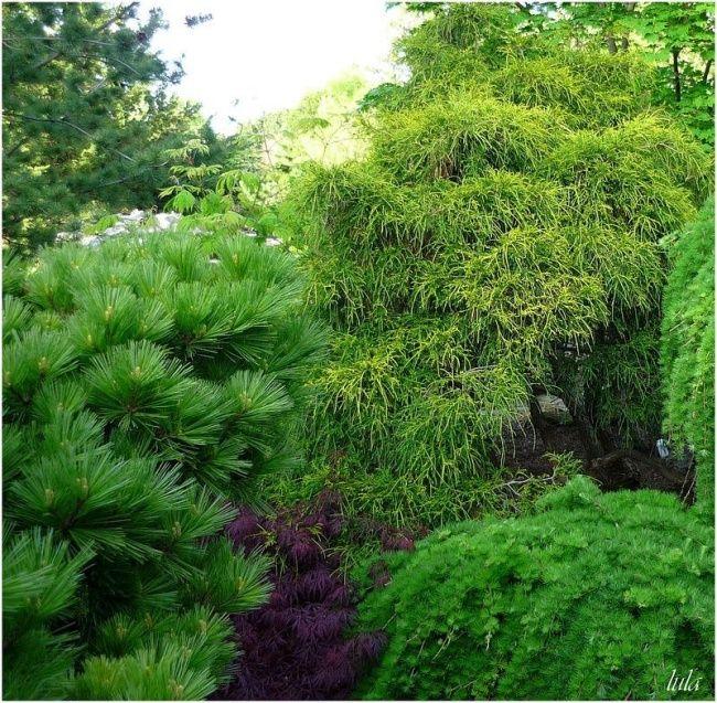 17 best images about conif res on pinterest gardens sun for Bd du jardin botanique 50