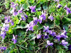 Kdy sbírat léčivé bylinky. Nabízíme praktický kalendář sběru nejznámějších léčivých bylin a rostlin, z nichž se dají připravit