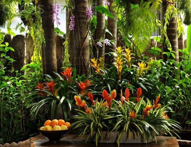 "Red ginger and bromeliads in garden Garden designed by Robert ""Bobby"" Gopiao in Manila. Mr. Gopiao is a world-famous bonsai master and garden designer."