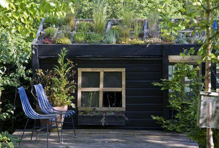 Living Roofs Made Easy: Simple Tips for Getting Started