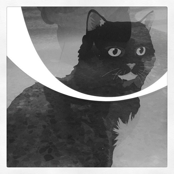 #Instagram photo of Trim the Cat at the State Library of NSW - find Trim on the Glasshouse wall