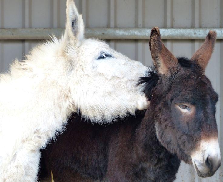 Donkeys like playing too! @islandfarmdonks