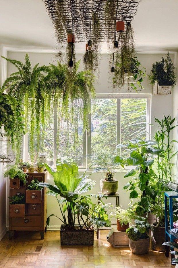 6 Ideias Para Ter Plantas Em Pequenos Espacos Plantas Dentro De Casa Jardins De Casas Decoracao Natural Para Casa