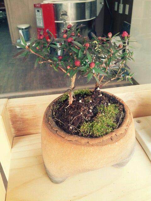 토모공방에 찾아온 봄,  TOMO ceramic studio ceramic pot