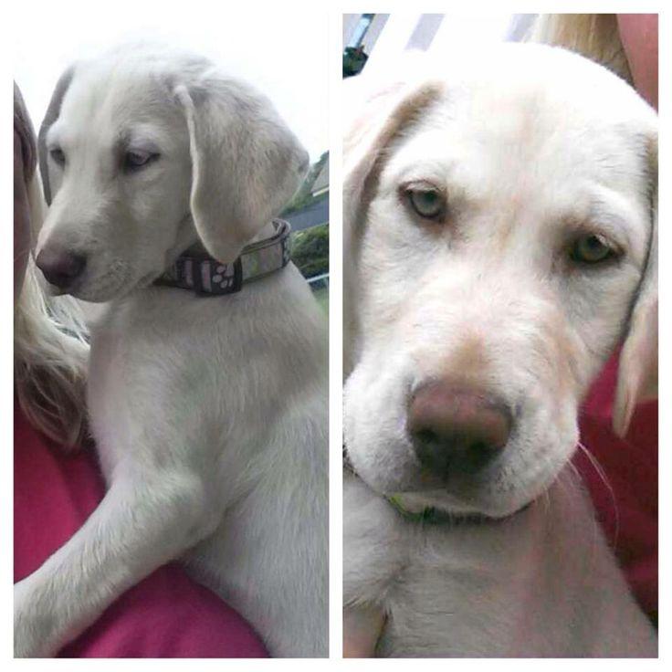 Charleston Animal Society Adoptable Dogs