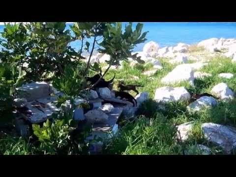 Happy cat family (Busted John Deley) - YouTube