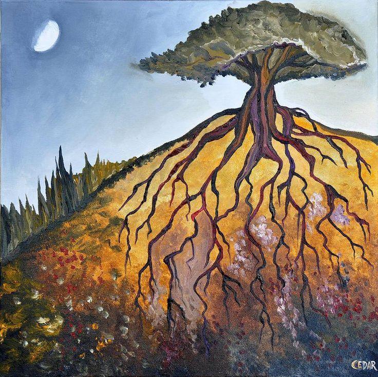 Deep Roots - Cedar Lee